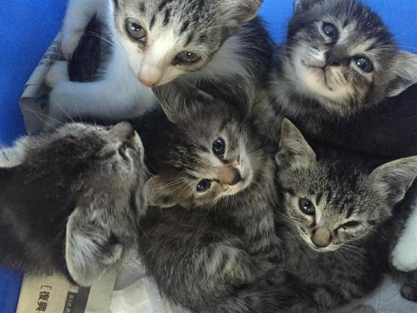 産経ニュース【ローカルプレミアム】年間2291匹 猫殺処分全国上位の千葉県 「捨てる人さえいなければ」と憤りの声サイトナビゲーションニュースプレミアムPR【ローカルプレミアム】年間2291匹 猫殺処分全国上位の千葉県 「捨てる人さえいなければ」と憤りの声PRPRPRご案内PRPR「ニュース」のランキングPR産経スペシャル今週のトピックスPR