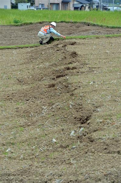 本震で動いたとみられる布田川断層。畑が高さ約50センチ近く隆起していた=16日午後3時22分、益城町