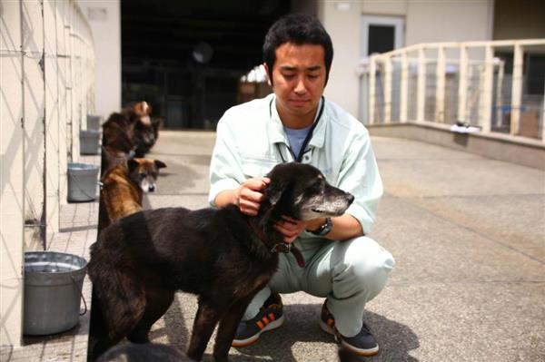 地震で飼い主からはぐれた犬を世話する熊本市動物愛護センターの職員