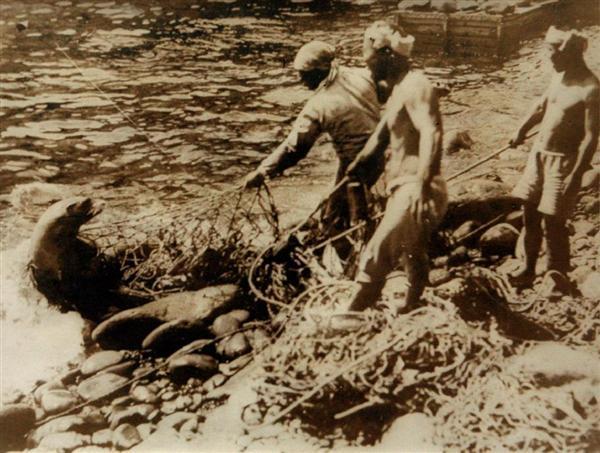 竹島を考える】「アシカ絶滅は日本のせい」は捏造…韓国の定説に韓国紙 ...