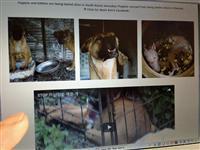 韓国で食用として食べられてしまう犬たち。衛生状態の悪い檻の中に閉じ込められている…=コリアン・ドッグス・オーガニゼーションの公式サイトより