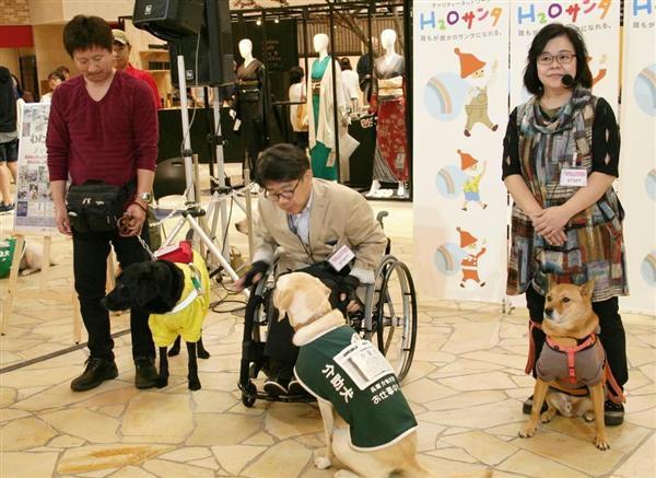盲導犬、介助犬、聴導犬(左から)がユーザーと一緒に参加した補助犬啓発イベント=大阪市北区