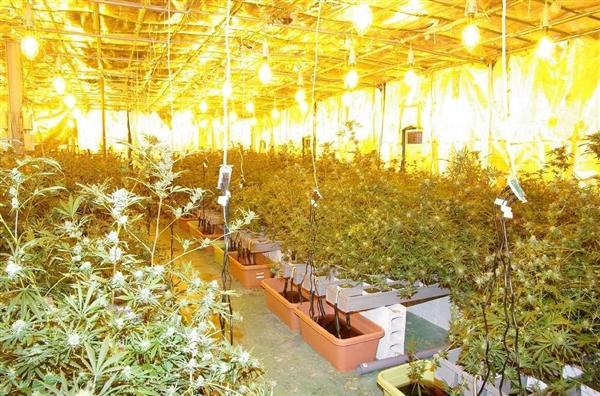 和歌山・かつらぎ町の大麻工場は...