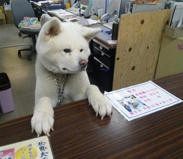 ザキトワに秋田犬(マサル)がなぜ贈呈されたの …