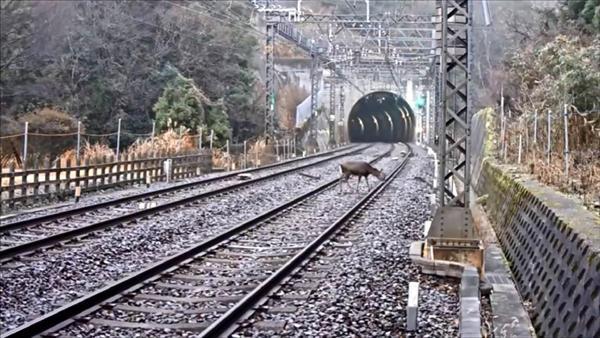 近鉄大阪線列車衝突事故