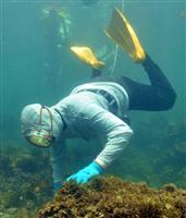 「あまちゃん」世界へ! 海女漁の国定答申、ユネスコ登録も視野に 三重 - 産経ニュース
