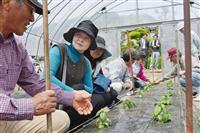 先輩農家(左端)から、バジルの苗木の育て方を教わる甲斐蔦子さん(左から3人目)ら=4月、大分県国東市