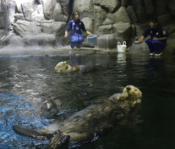 水族館 ラッコ 須磨
