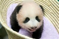 【動画あり】上野動物園のパンダ 名前は「シャンシャン(香香)」に