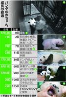 【上野パンダ】シャンシャン危険乗り越え「名付けの日」 12月に会えるかなぁ