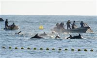 【衝撃事件の核心】「どうせ裏切る」シー・シェパード捕鯨妨害中止宣言に飛び交う憶測 テロ…