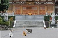 【日本再発見 たびを楽しむ】御誕生寺