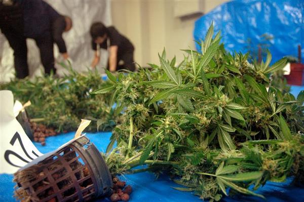 【マリファナ】スイスの合法大麻ブームに暗雲? YouTube動画>16本 ->画像>73枚