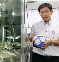 超音波でサクラマスを「健康」に、養殖拡大目指し研究 富山