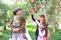 【日本再発見 たびを楽しむ】 通年で果物狩り 秋はリンゴ ~群馬・原田農園