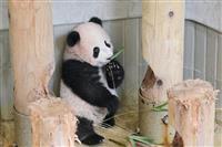 【上野パンダ】「シャンシャン」12月19日公開で調整 準備がしやすい休園日開けに