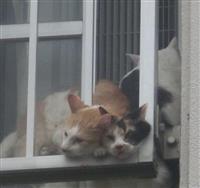 【衝撃事件の核心】「膝までの汚物に大量のハエ」猫50匹放置でぬかるみと化した人気市営住…