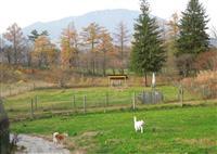 【日本再発見 たびを楽しむ】 12万坪の敷地 駆け回る保護犬~ペットの里(岩手県滝沢市…