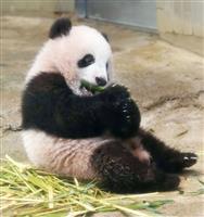 【上野パンダ】(内覧会動画あり)倍率46倍くぐり抜け…シャンシャン、きょう午前9時45…