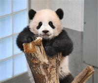 シャンシャン新年も元気 200日過ぎ 上野動物園