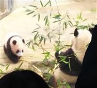 上野動物園、シャンシャンの公開時間延長 23日以降は4時間半に