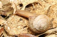 希少種に49種追加へ 植物や貝、絶滅の恐れ