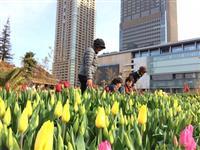 【うめきたガーデン】「春」を先取り、「真冬のチューリップ祭」開催中!