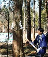 東京五輪へ提供ヒノキ伐採 岐阜・白川町で「斧入式」 選手村建設