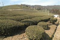 【関西の議論】ドヤ街の次は茶畑の町…星野リゾートが狙う意外な土地