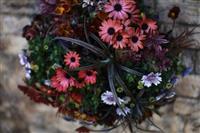 3月14日から寄せ植え作品展示 うめきたガーデン「欧風オールドビレッジ」