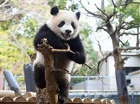 パンダのシャンシャン観覧は「表門」限定 13日から上野動物園