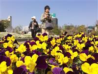 最後の2日間は花の苗をプレゼント うめきたガーデン、3月18日閉幕