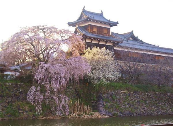 昨シーズンの様子。約800本のしだれ桜やソメイヨシノが郡山城を彩る=奈良県大和郡山市