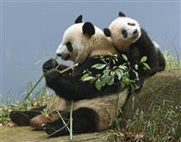 パンダ・シャンシャン効果抜群 上野動物園、6年ぶり400万人突破