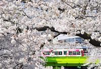 【ん!?】ソメイヨシノ咲く…旧染井村を訪ねてみた