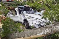 倒木直撃「トヨタ2000GT」、道路管理の富山県と和解へ 生産台数わずか337台、35…