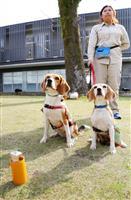 鹿児島大でヒアリ探知犬披露 においで発見、合図は「お座り」