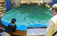 普賢岳の噴火映像、最新技術で再現 「災害記念館」改装オープン 長崎