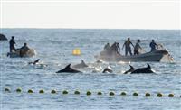 「イルカ追い込み漁」禁止に反発、新たに1施設がJAZA退会、6施設目に 京急油壺マリン…