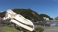 2020年東京五輪で日本の食文化、鯨食紹介を 映画「ビハインド・ザ・コーヴ」の八木景子…