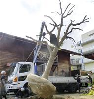 「希望の木」移植へ搬出、阪神大震災遺児支援シンボル