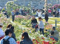 【動画】大阪・中之島のバラ園、開花がピークに