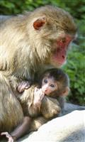 「ソダネ」って呼んでネ 高崎山の赤ちゃんザルの名前決定