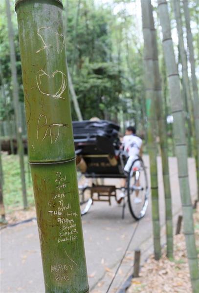 """【京都】嵐山の竹林100本に中国語や""""ハングル""""の落書き 刃物で彫られる YouTube動画>1本 ->画像>101枚"""