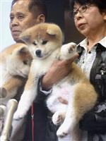26日に日露首脳会談、首相訪露正式発表 ザギトワ選手への秋田犬贈呈式に出席