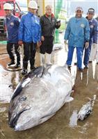 マグロ漁獲枠拡大可能に 国際機関、親魚回復と評価