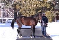 【スポーツ異聞】日本の名馬が世界を席巻 ディープ産駒が英国クラシックを制す