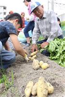 「JR脱線事故を忘れないで」 命の花文字畑でジャガイモ収穫 兵庫・尼崎