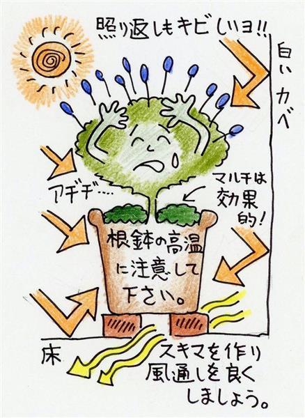 多田欣也のガーデニングレッスン14夏が来た上 産経ニュース