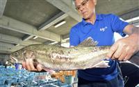 福島沖でスズキ漁再開